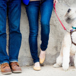 Chicago Engagement with Wheaten Terrier